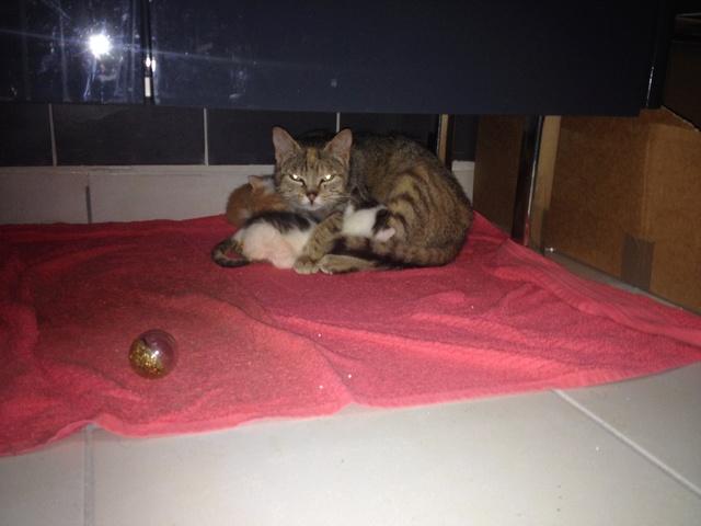 Portée 4 chatons Img_2837