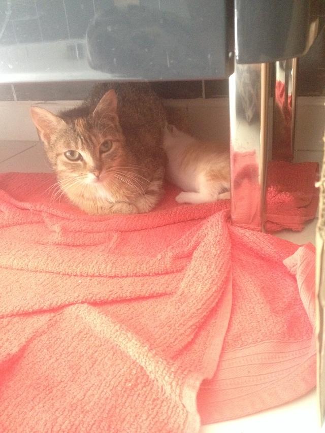 Portée 4 chatons Img_2840