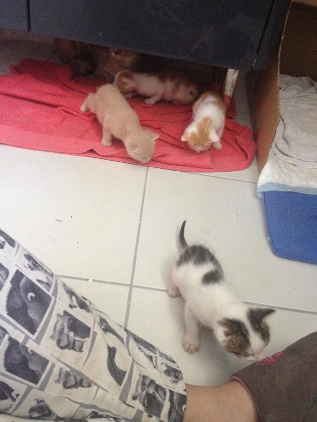 Portée 4 chatons Img_2841