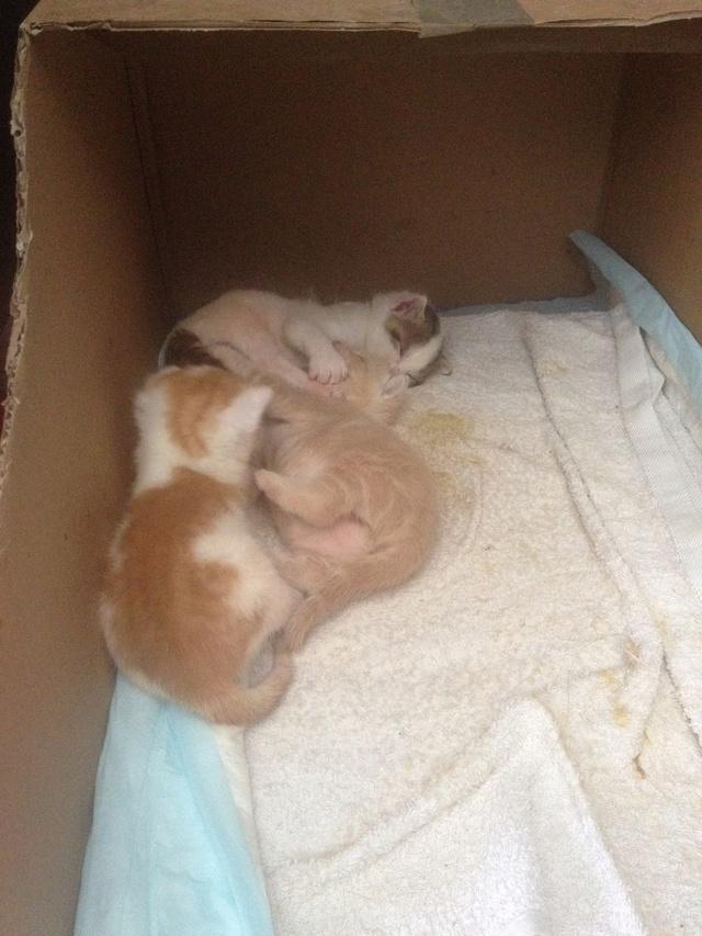 Portée 4 chatons Img_2842