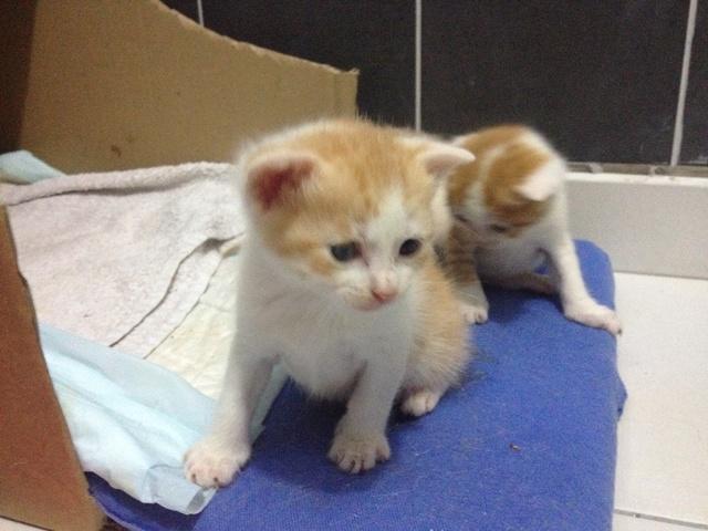 Portée 4 chatons Img_2844