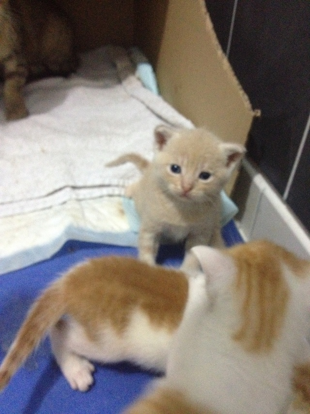 Portée 4 chatons Img_2846