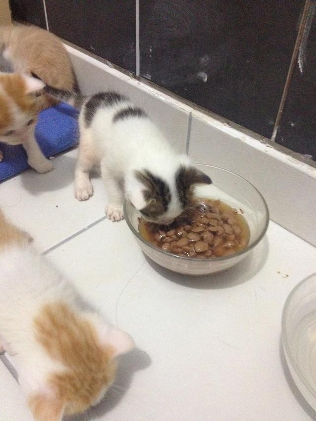 Portée 4 chatons Img_2847