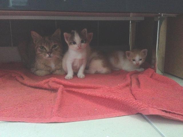 Portée 4 chatons Img_2848
