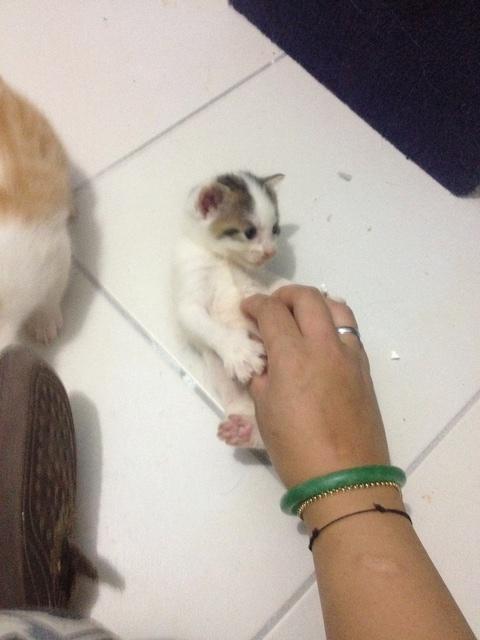 Portée 4 chatons Img_2910