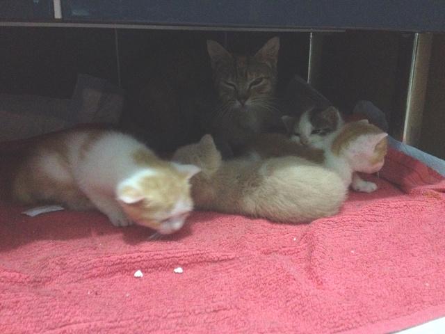 Portée 4 chatons Img_2912