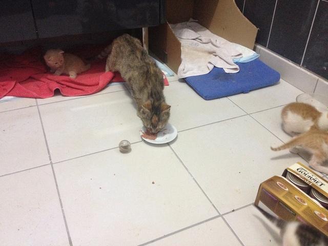 Portée 4 chatons Img_2914