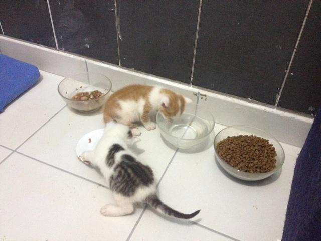 Portée 4 chatons Img_2915
