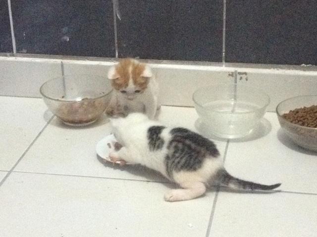 Portée 4 chatons Img_2916