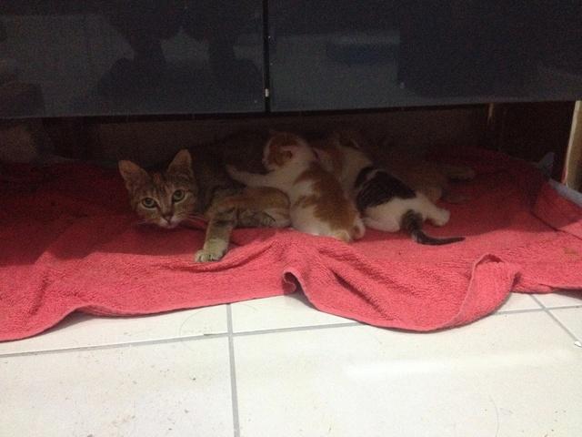 Portée 4 chatons Img_2917