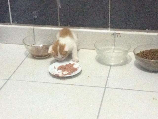 Portée 4 chatons Img_2918