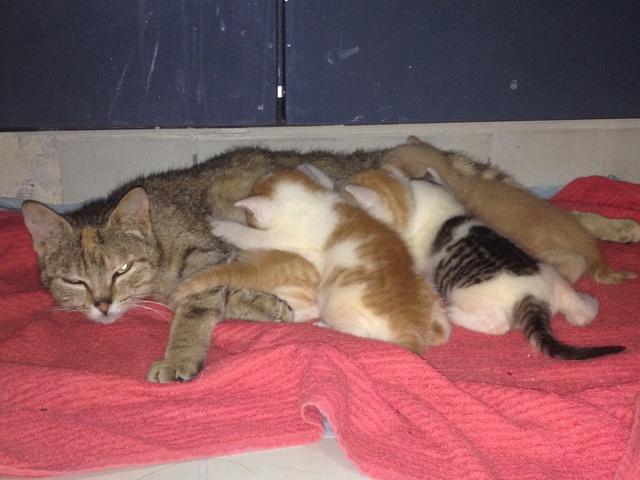 Portée 4 chatons Img_2920