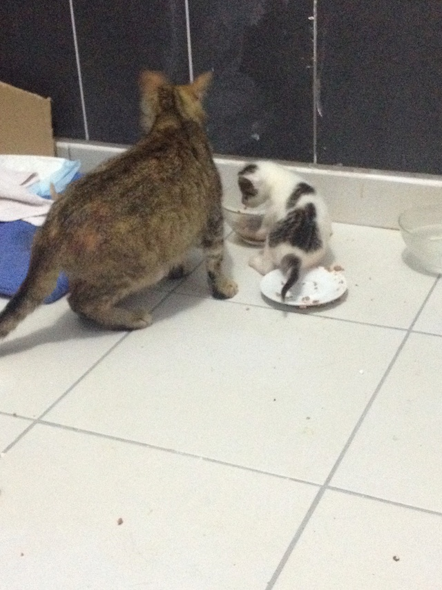 Portée 4 chatons Img_2922