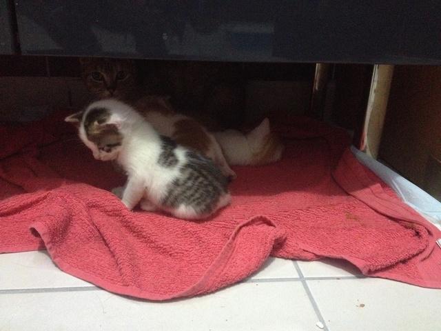 Portée 4 chatons Img_2923