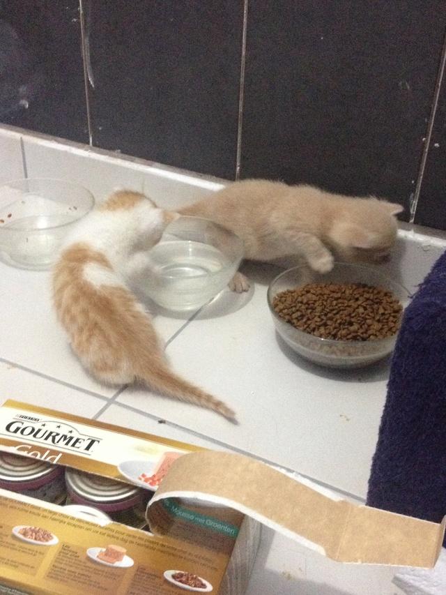Portée 4 chatons Img_2924