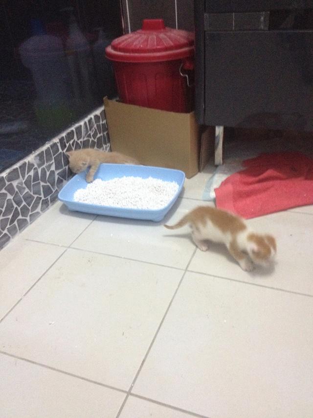 Portée 4 chatons Img_2928