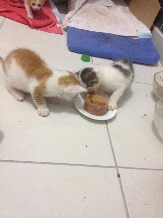 Portée 4 chatons Img_2929