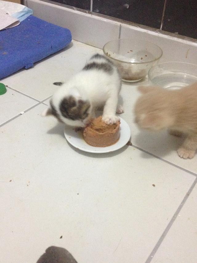 Portée 4 chatons Img_2930