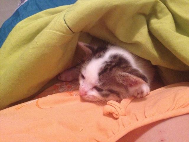 Portée 4 chatons Img_2932