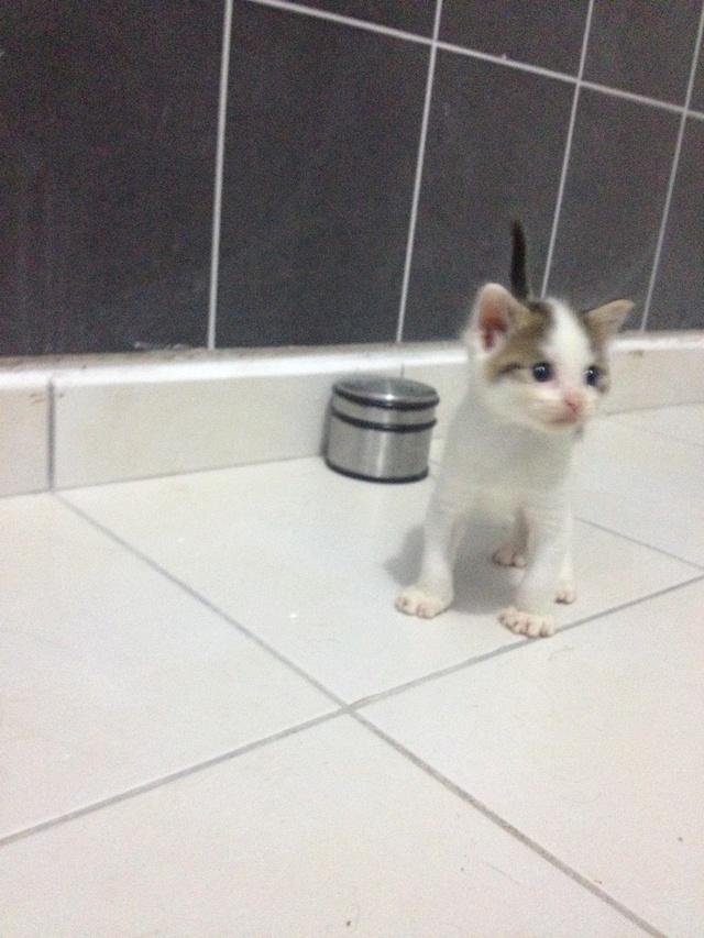 Portée 4 chatons Img_2934