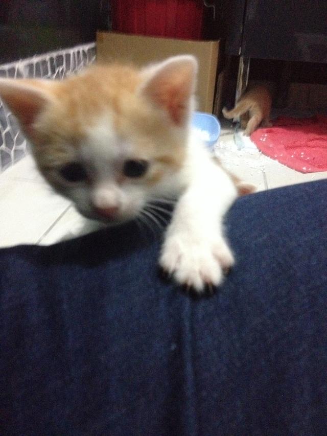 Portée 4 chatons Img_2935