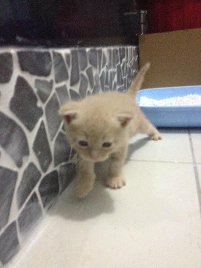 Portée 4 chatons Img_2936