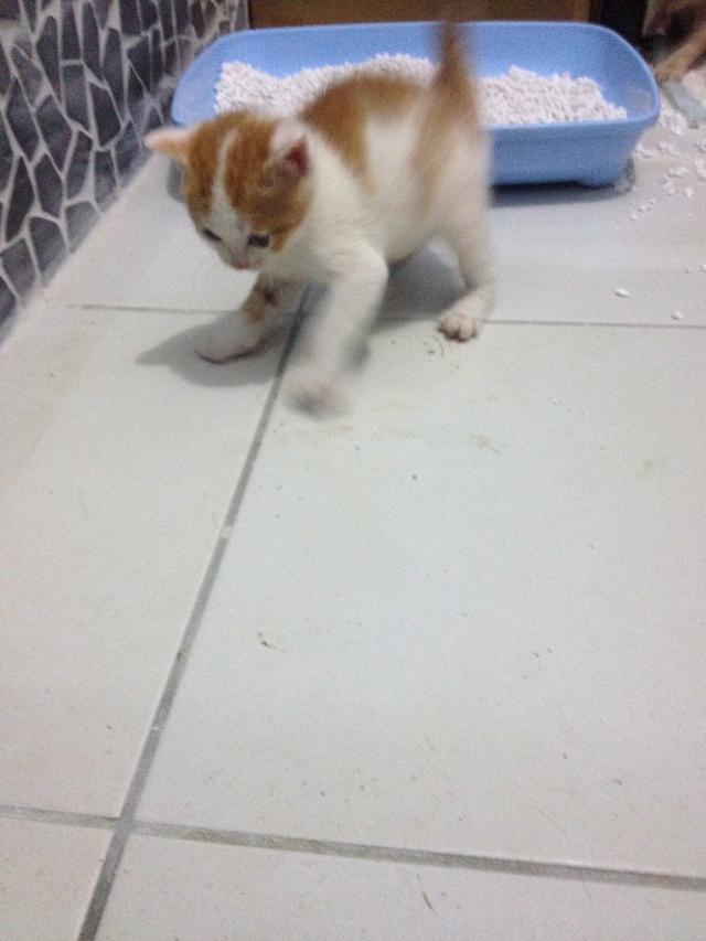 Portée 4 chatons Img_2937