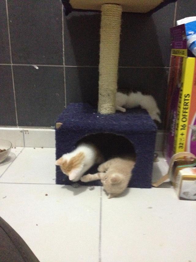 Portée 4 chatons Img_2939