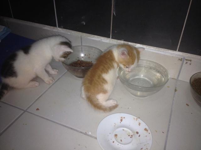 Portée 4 chatons Img_2942