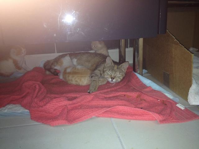 Portée 4 chatons Img_2944