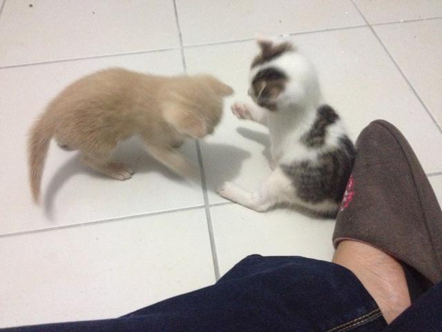Portée 4 chatons Img_2945