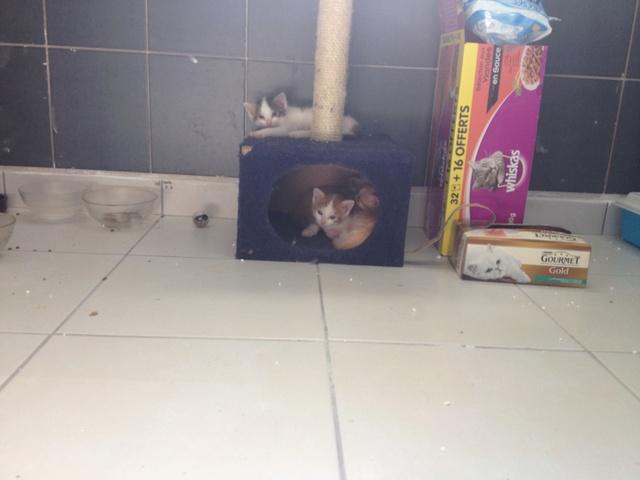 Portée 4 chatons Img_2946