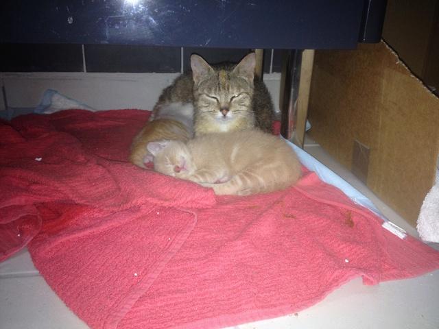 Portée 4 chatons Img_2947