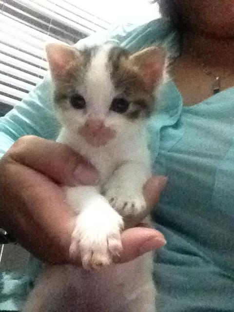 Portée 4 chatons Img_2949