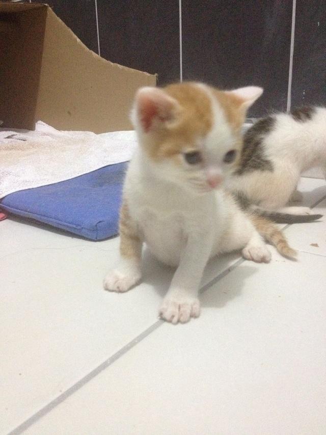 Portée 4 chatons Img_2951