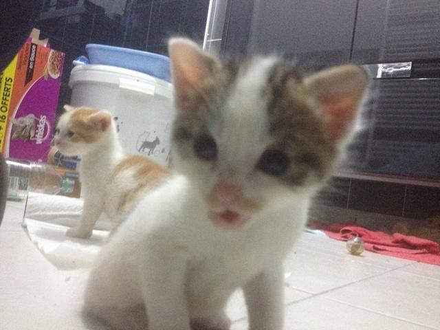 Portée 4 chatons Img_2952