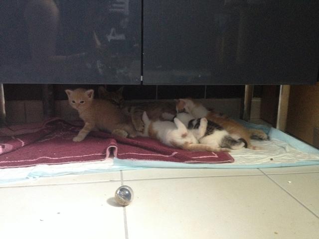 Portée 4 chatons Img_2954