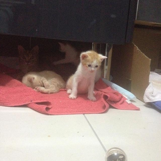 Portée 4 chatons Img_2956