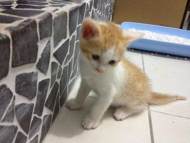 Portée 4 chatons Img_3012