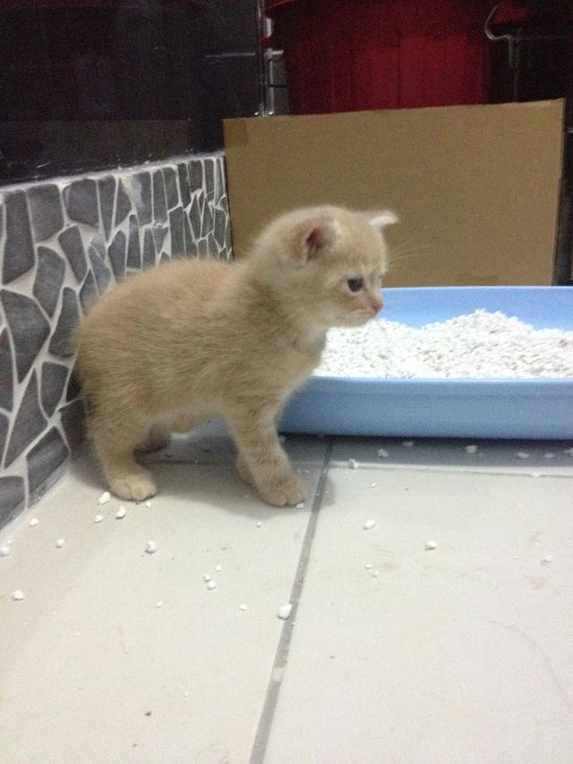 Portée 4 chatons Img_3013