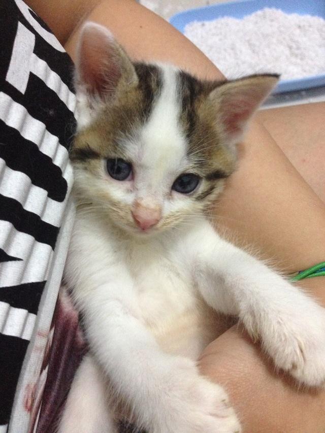 Portée 4 chatons Img_3014