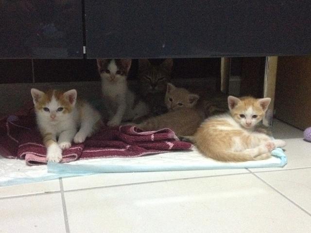 Portée 4 chatons Img_3015