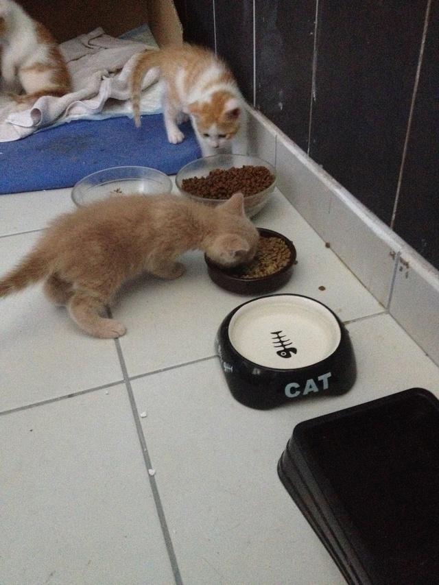 Portée 4 chatons Img_3016