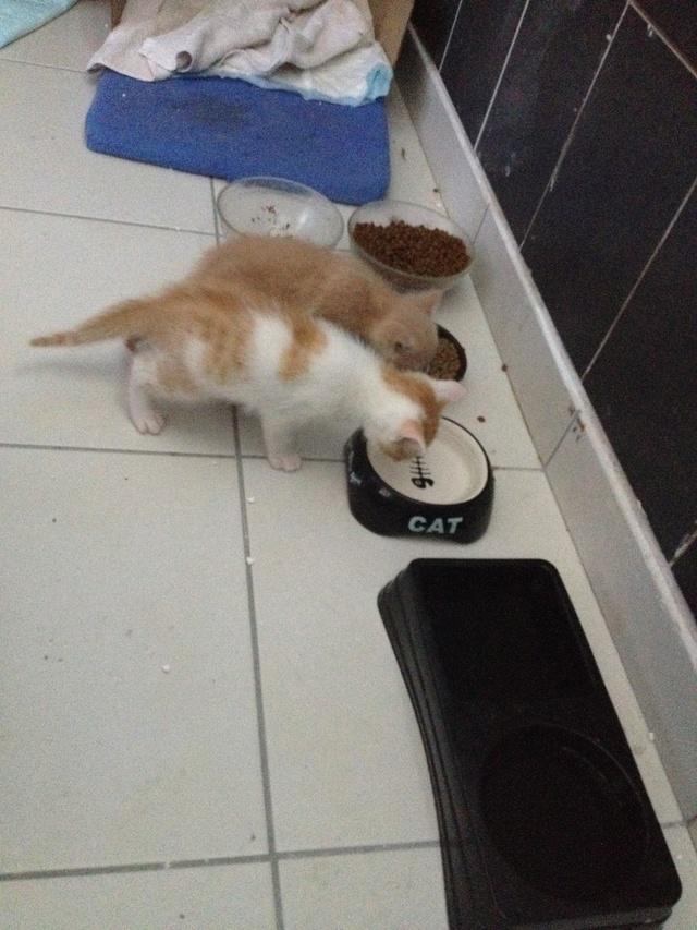 Portée 4 chatons Img_3017