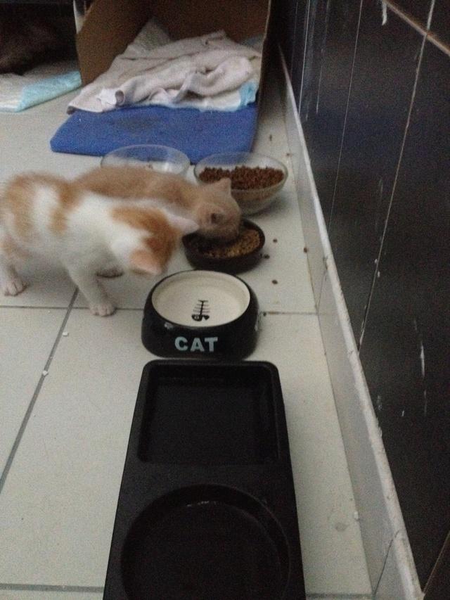 Portée 4 chatons Img_3018