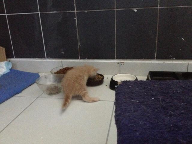 Portée 4 chatons Img_3019