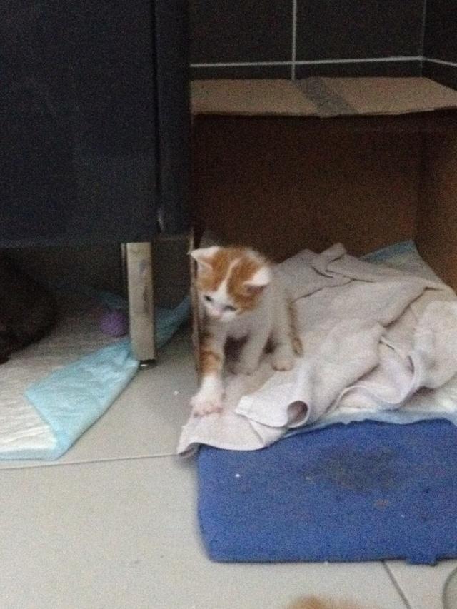 Portée 4 chatons Img_3020