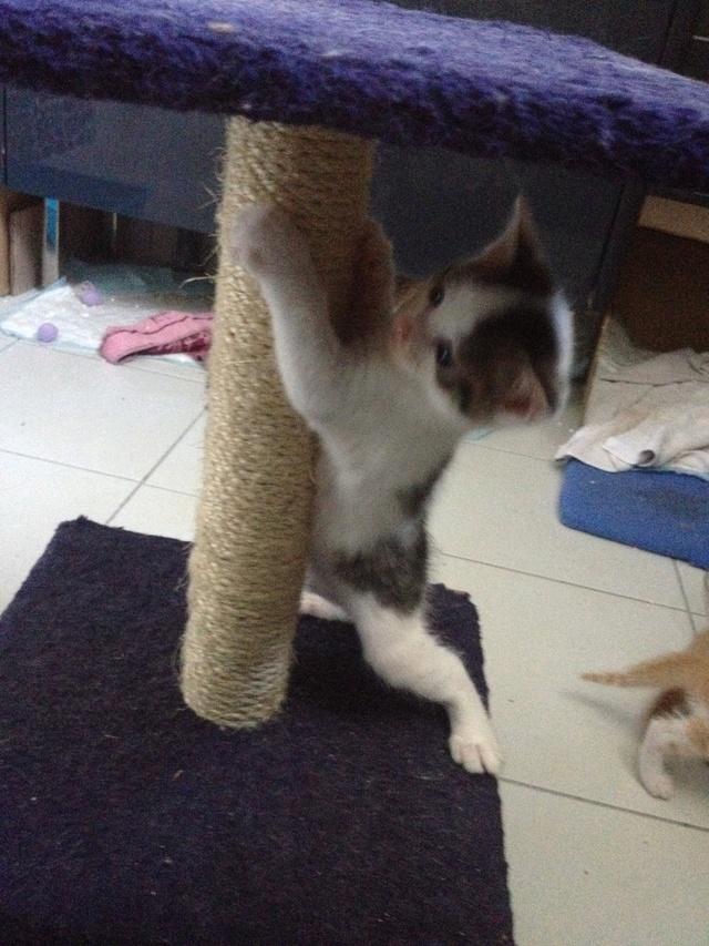 Portée 4 chatons Img_3022
