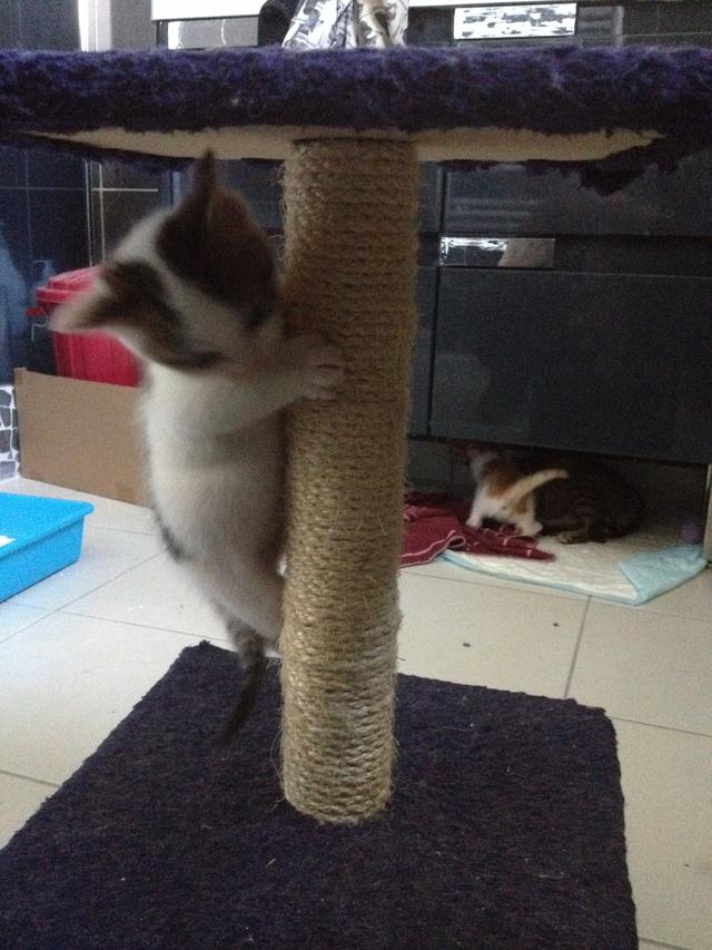 Portée 4 chatons Img_3023