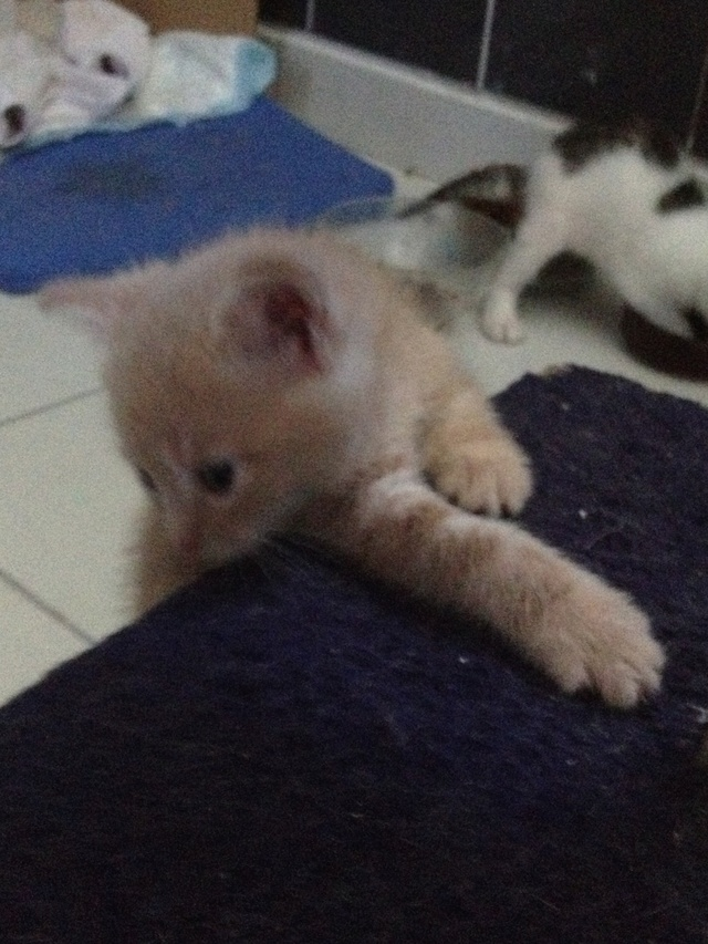 Portée 4 chatons Img_3025